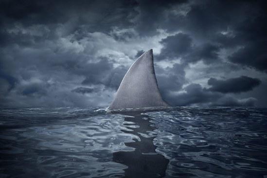 sharkR1